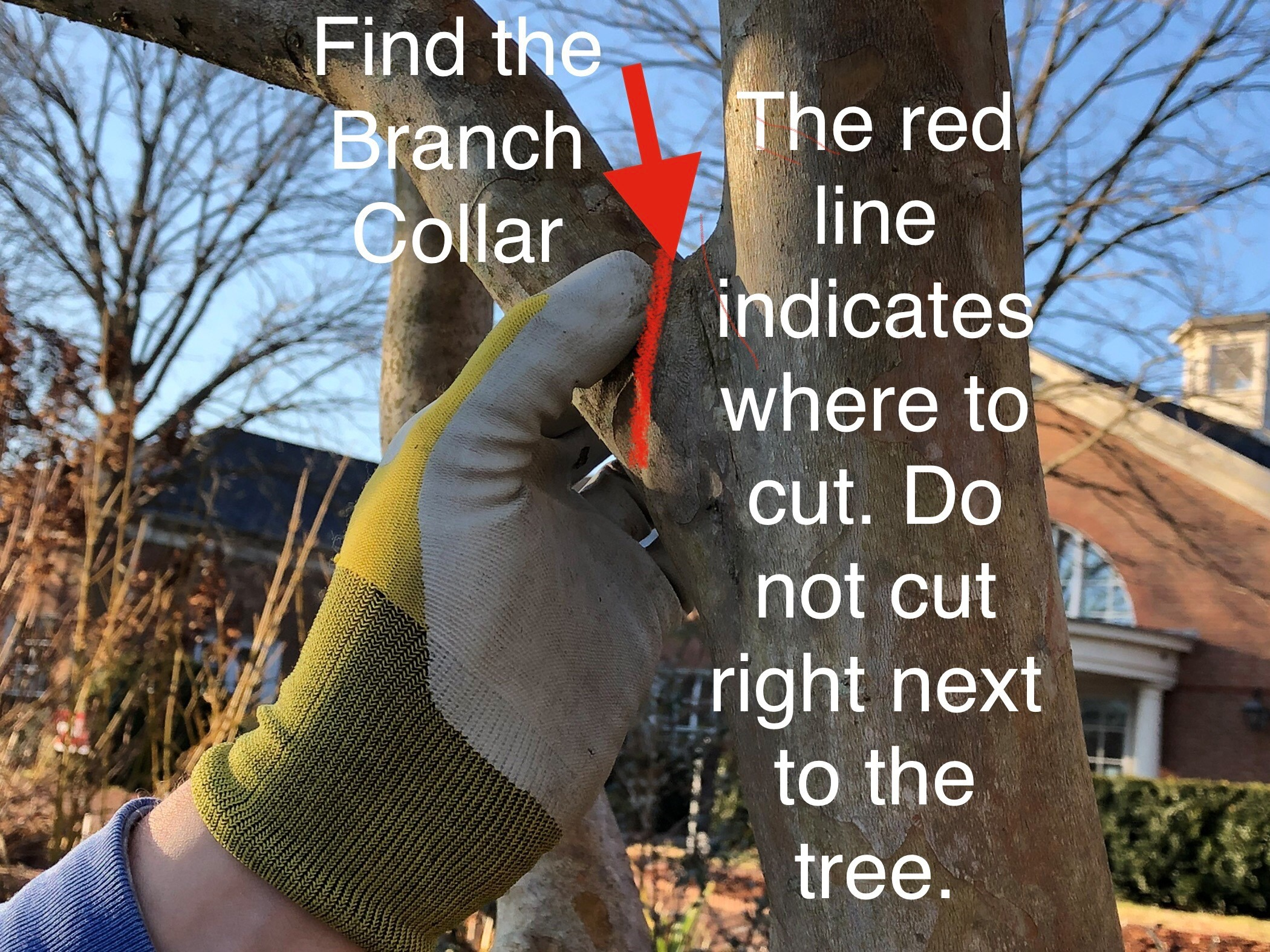 Red line showing where to cut