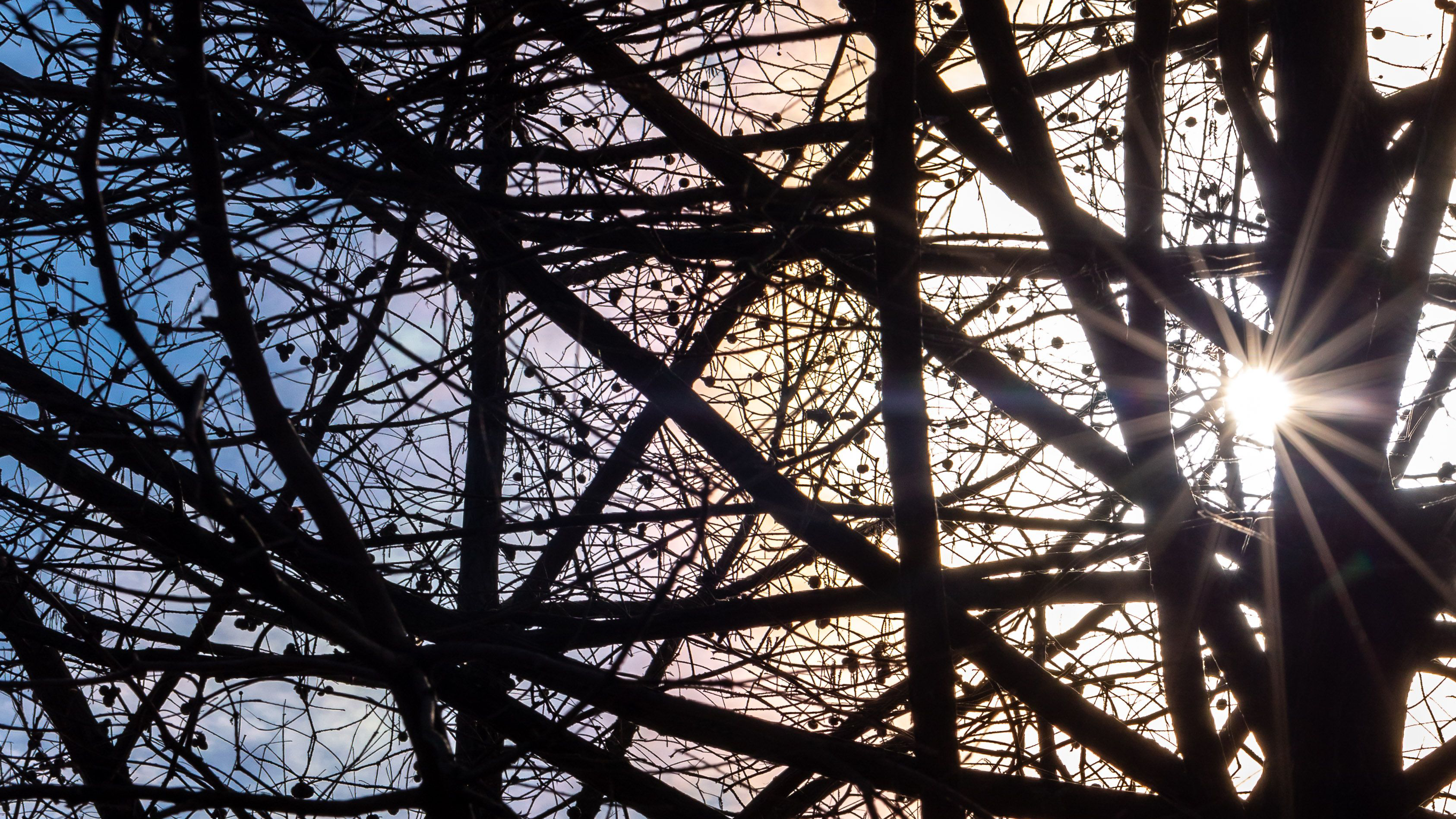 The sun shines through tree branches. Image by Tom Hennessy