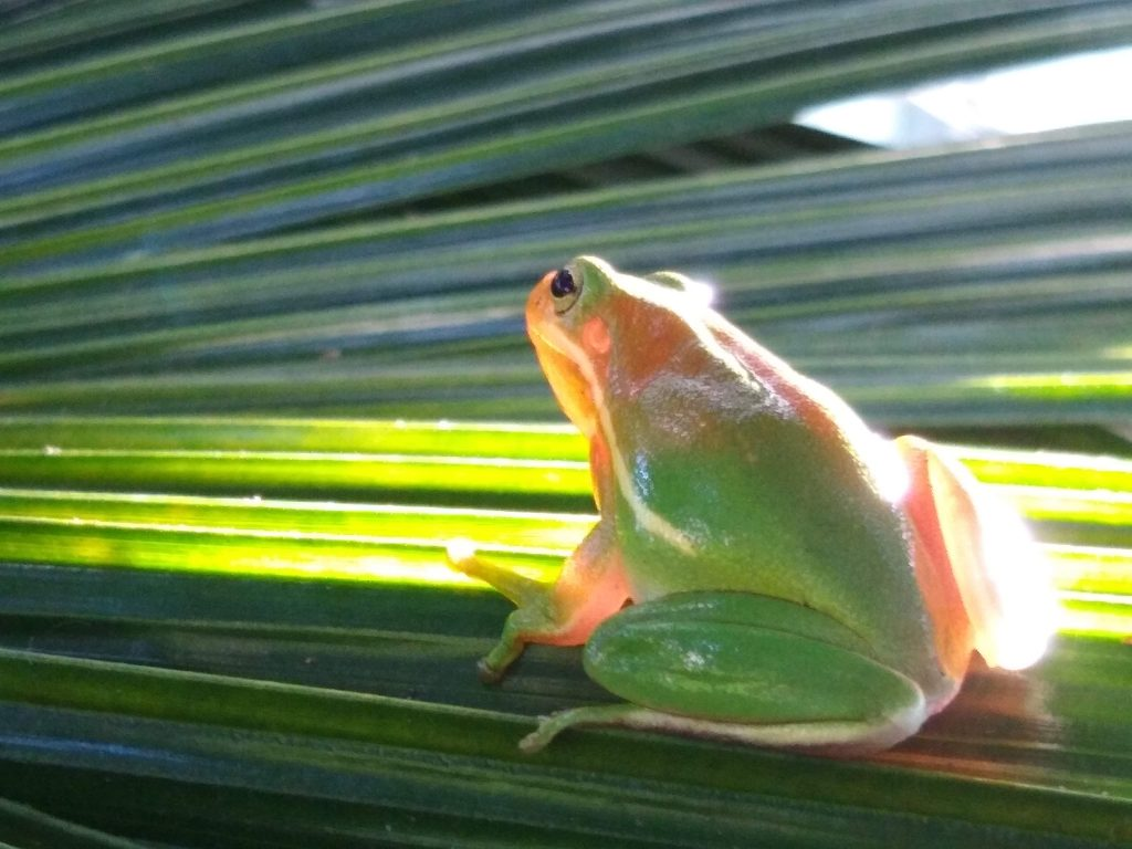 frog with tropical plant