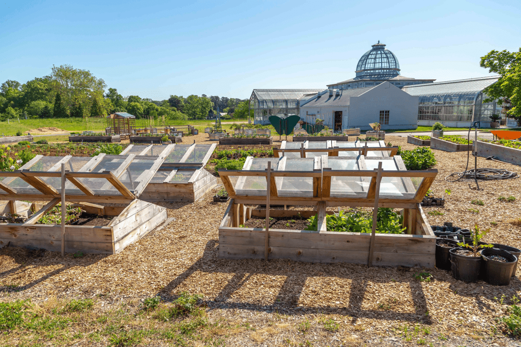 Cold frames extend the growing season Kroger Community Kitchen Garden. Image by Tom Hennessy, 2018