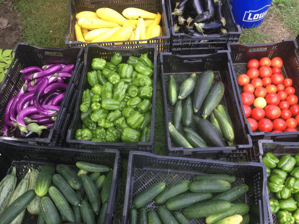 Harvest bounty from Kroger Community Kitchen Garden