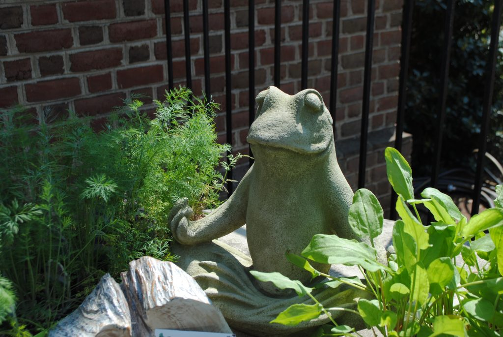 Yoga Frog in Herbs