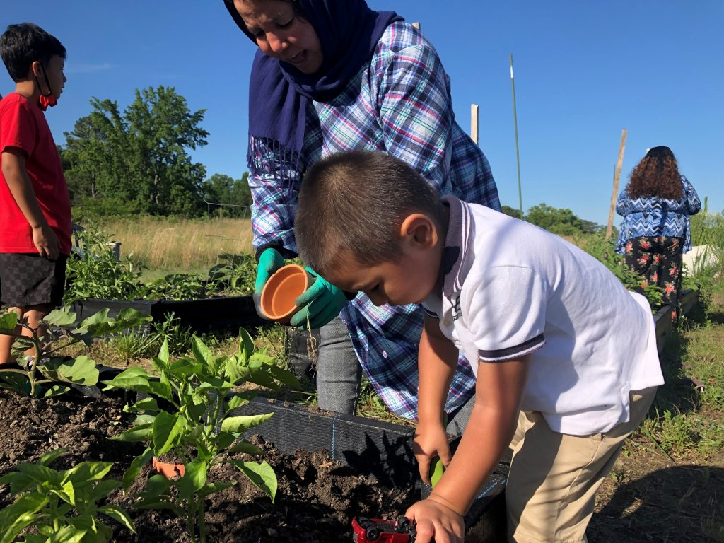 Afghan children gardening in raised beds