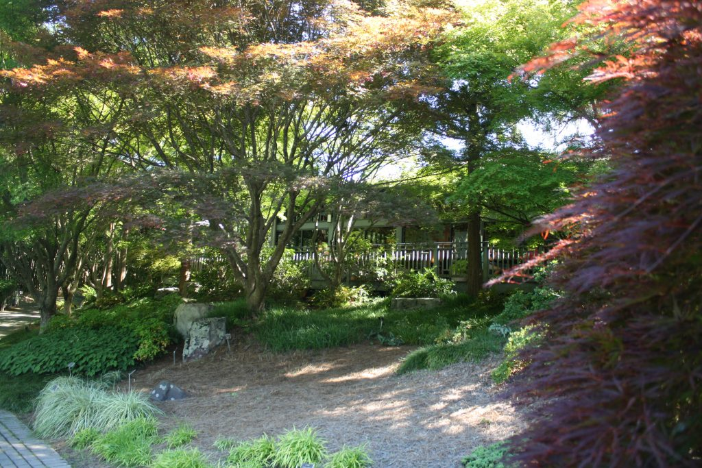 Japanese maples in the Asian Valley -- Things to do in Richmond