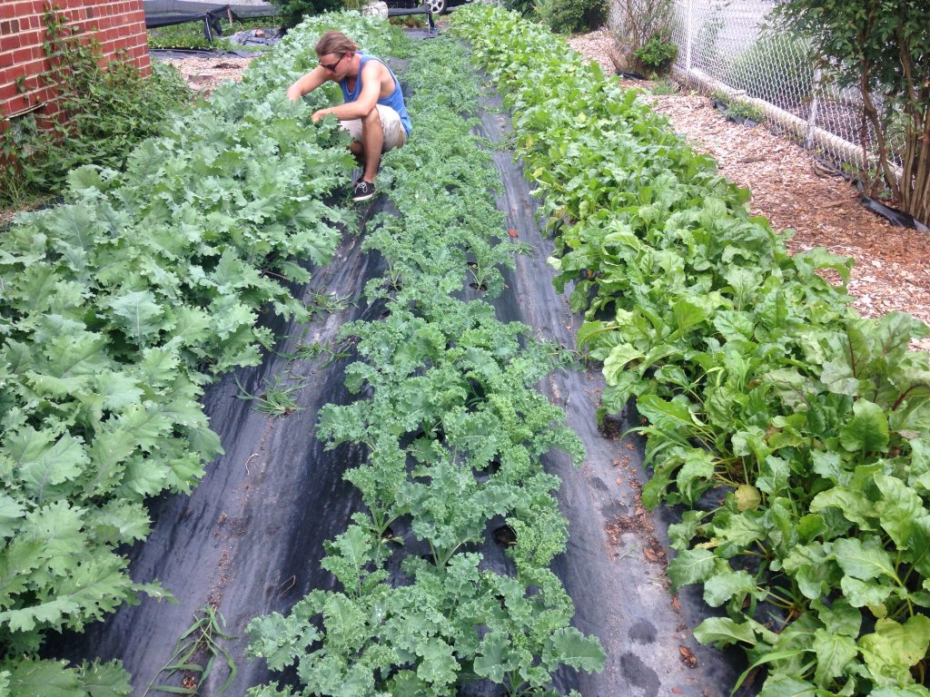 Brad Heath tending to the produce in his yard.