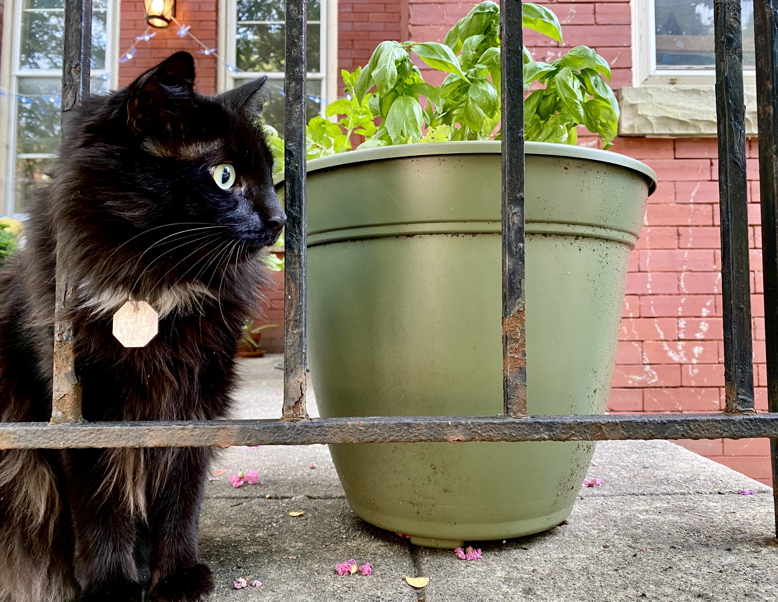 Natalie's cat, Bug, stands beside some potted herbs.
