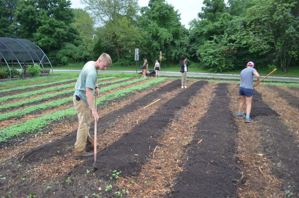 Sustainable Agriculture Gardener Conor Collins planting kale.