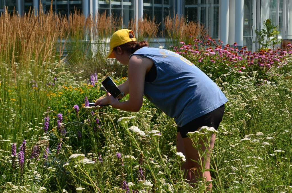 Allison Ortiz collecting pollinator DNA